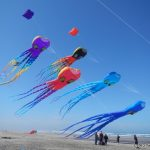 Lots-of-Peter-Lynn-octopus-kites